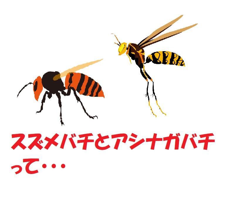 スズメバチとアシナガバチの見分け方と対処法!