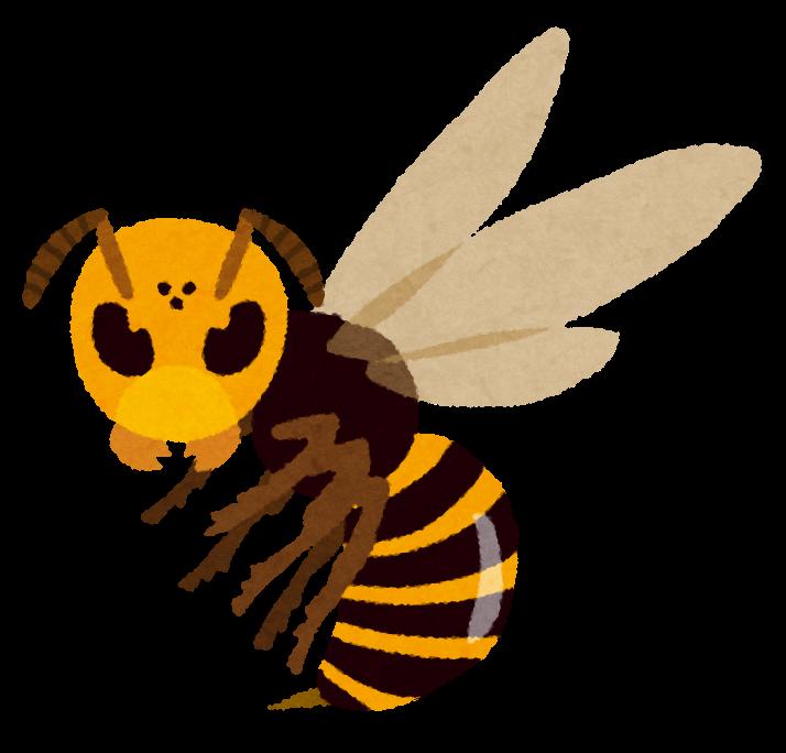 世界最大の蜂(ハチ)、オオスズメバチの生態を知る