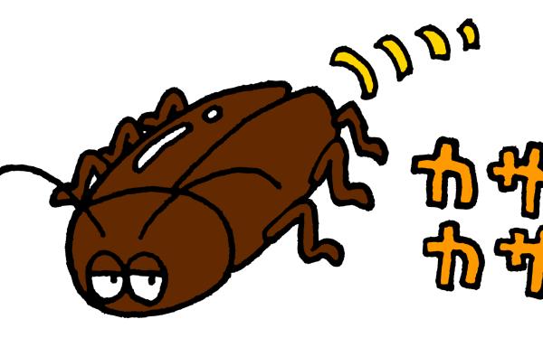 一般家庭のゴキブリ駆除に毒餌をおすすめしないワケ