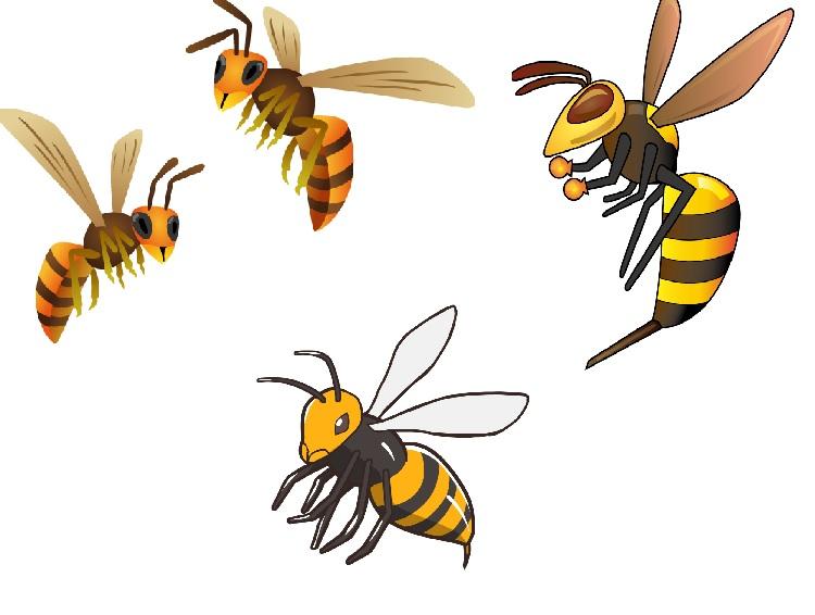 こんなに多いの?スズメバチの種類。それぞれの特徴を知る。