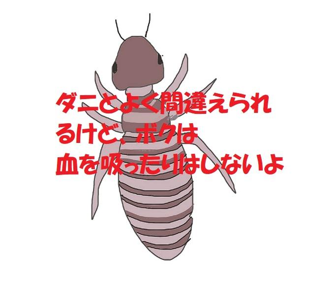 チャタテムシってどんな虫?害はあるの?