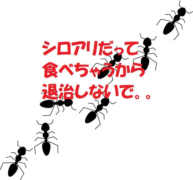 蟻の被害ってなんだろう?対策と駆除は?